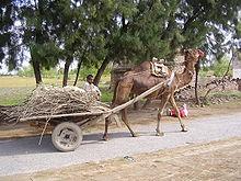 Seven Camels (2/5)